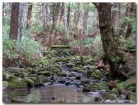 森林浴-2-