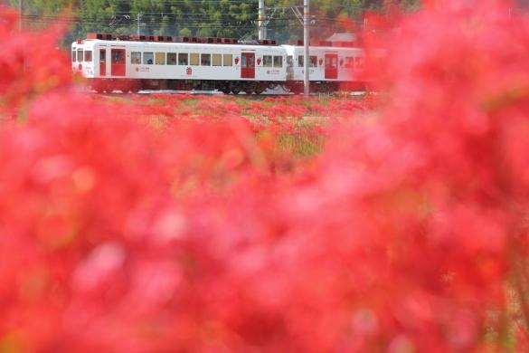 2009/9/21 和歌山電鐵貴志川線 吉礼~伊太祈曽