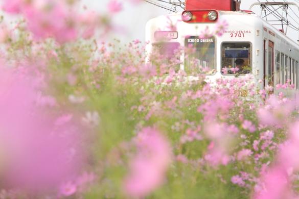 2014/10/04 和歌山電鐵貴志川線 吉礼~伊太祈曽