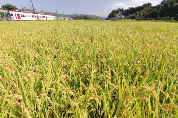 2014/9/28 和歌山電鐵貴志川線 大池遊園~西山口