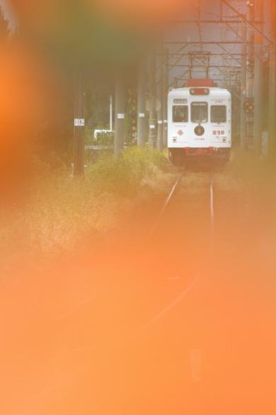 2014/10/11 和歌山電鐵貴志川線 甘露寺前~貴志