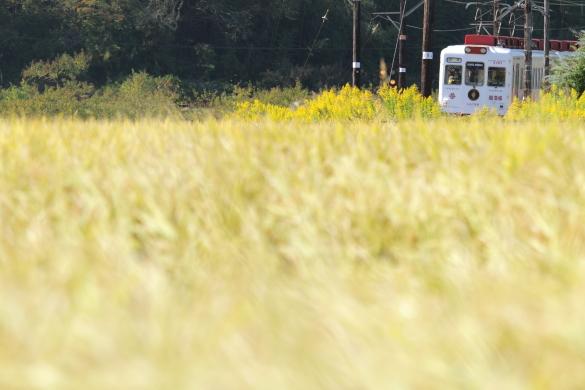 2014/10/18 和歌山電鐵貴志川線 大池遊園~西山口