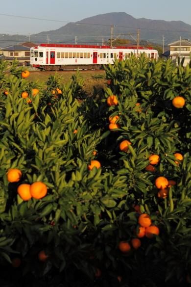 2010年11月 和歌山電鐵貴志川線 甘露寺前~貴志