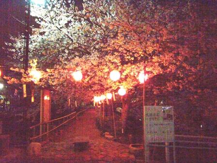 4-2夜桜