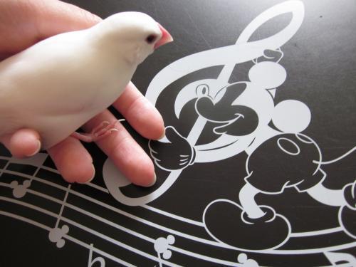 楽譜とピッチ