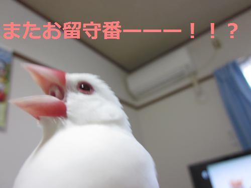 きしゃー!