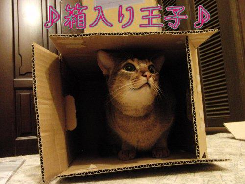 箱入り王子