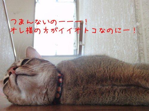 ナンバー1だぜぃ!