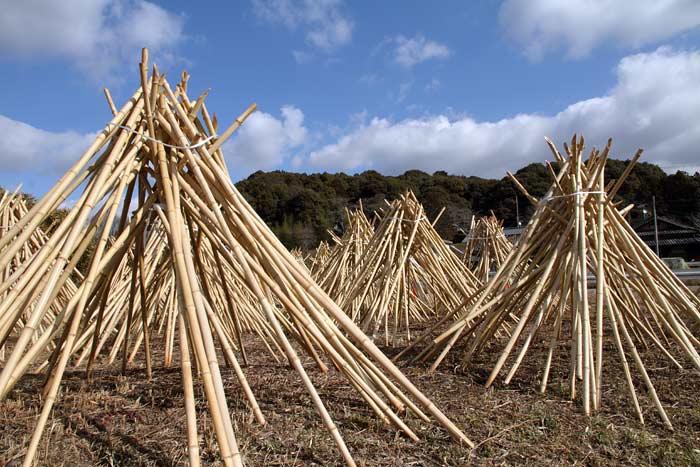 茶せんの里 竹の寒干し