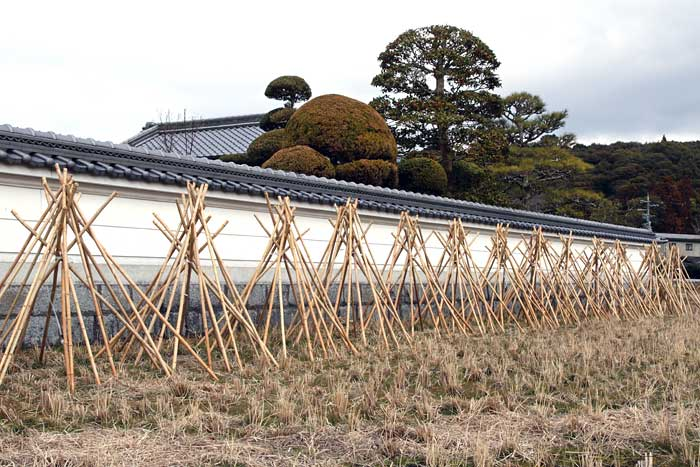 茶せんの里 竹の寒干し2