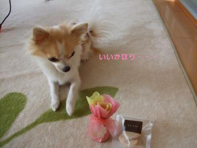033_convert_20110122210843.jpg