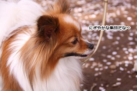 IMG_p0443.jpg