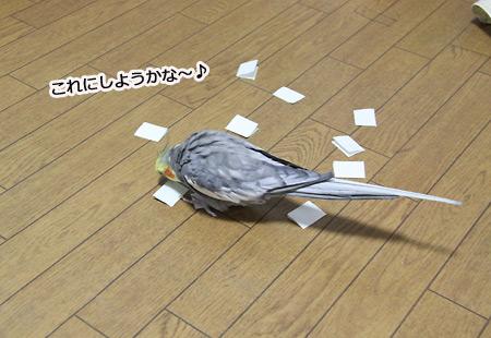 IMG_p1076.jpg