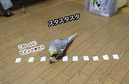 IMG_p1087.jpg