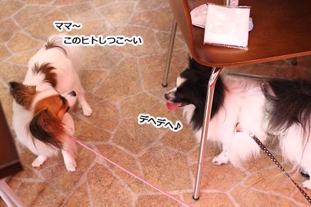 IMG_p2946.jpg