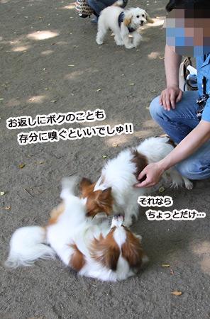 IMG_p3401.jpg
