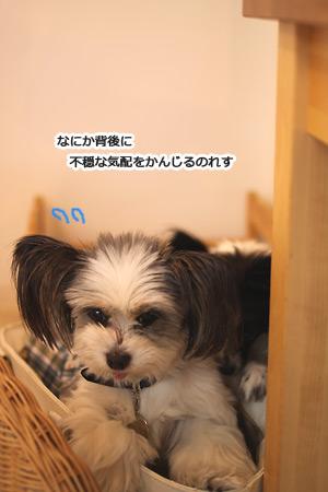 IMG_p3711.jpg