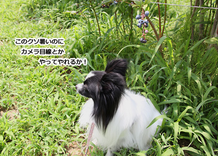 IMG_p4372.jpg
