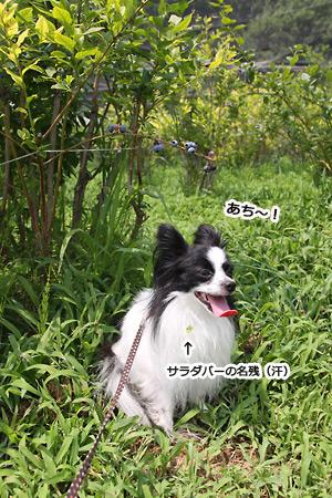 IMG_p4376.jpg