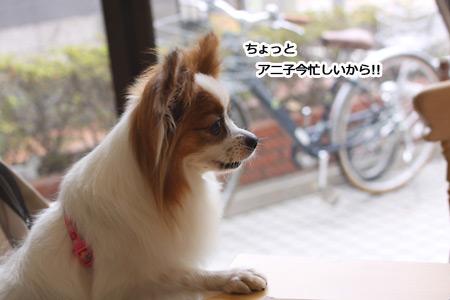 IMG_p4506.jpg