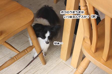 IMG_p4600.jpg