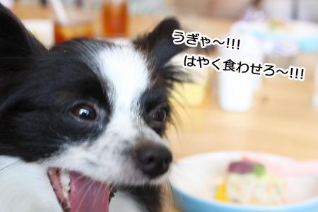 IMG_p4615.jpg