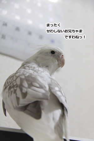 IMG_p5792.jpg