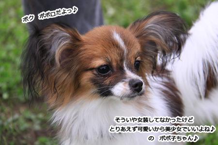 IMG_p7497.jpg