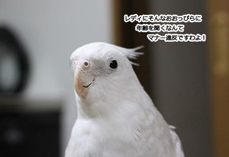 IMG_p7691.jpg