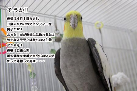 IMG_p8787.jpg