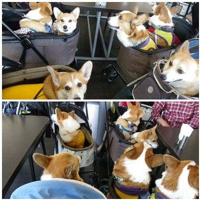 会議中の6コギ