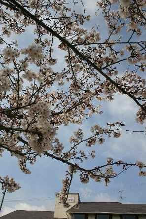 淡路島 ペンション 桜