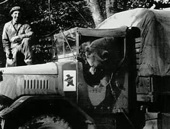ポーランド軍と熊