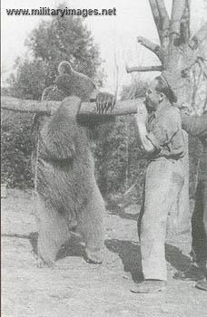ポーランド 熊