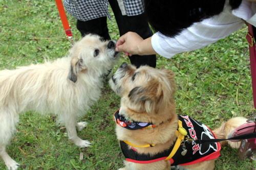 2011.10.8-10.11 kyushu 2 0072