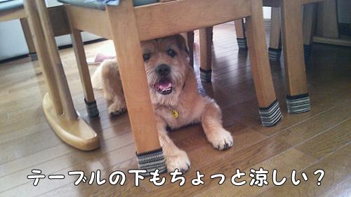 PhotoHenshu_o_20120817113158.jpg