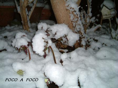 雪のクリロ