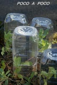 ペットボトル温室