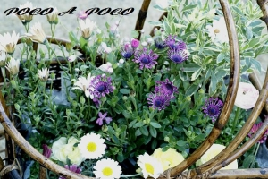 植え付け待ちの花