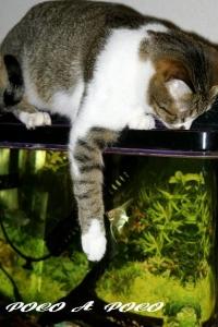 クロちゃんと熱帯魚
