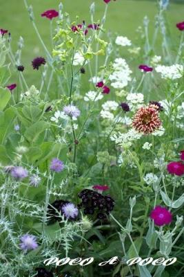 ボーダー花壇1