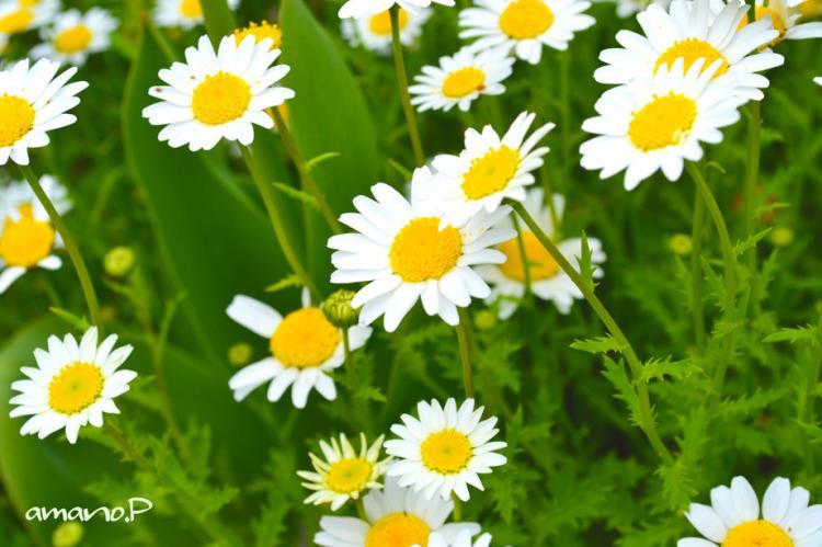 白い洋服に黄色のおぼうし