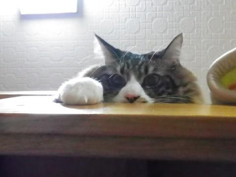 ベッド上段から下を覗き込むニケ