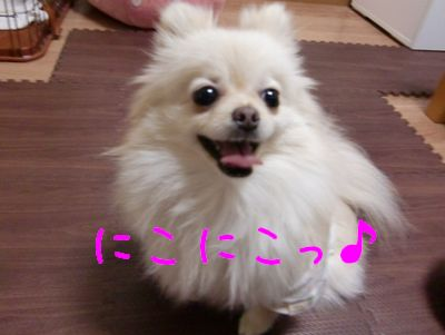 CIMG3279_20110323000418.jpg