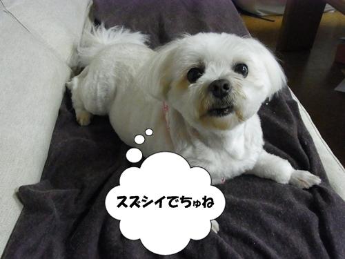 RIMG0826_20120721004432.jpg