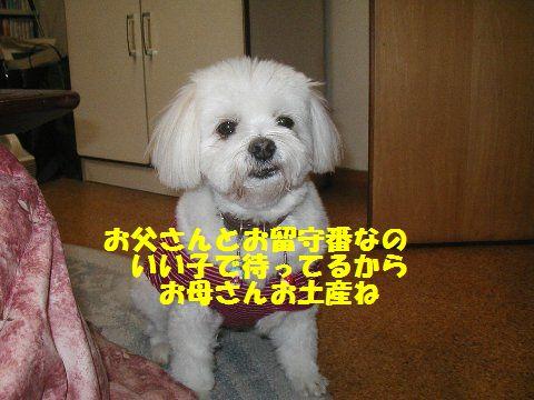 hanna_20111030022151.jpg
