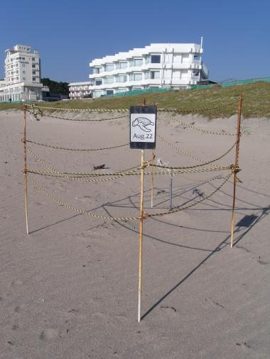御宿海岸 ウミガメ