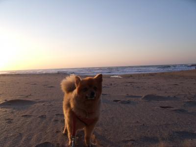 ラトン 朝の海岸 お散歩