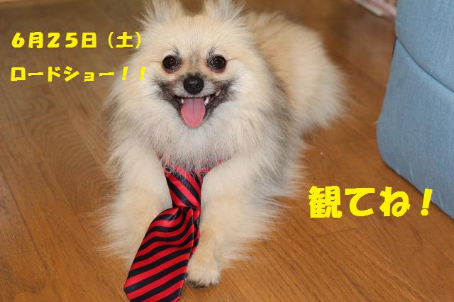 犬飼さん応援団