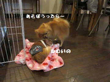 IMG_5267.jpg